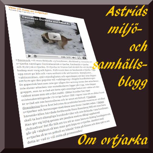Astridbloggen-ovtjarka.jpg