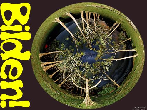 APOD-nild.jpg